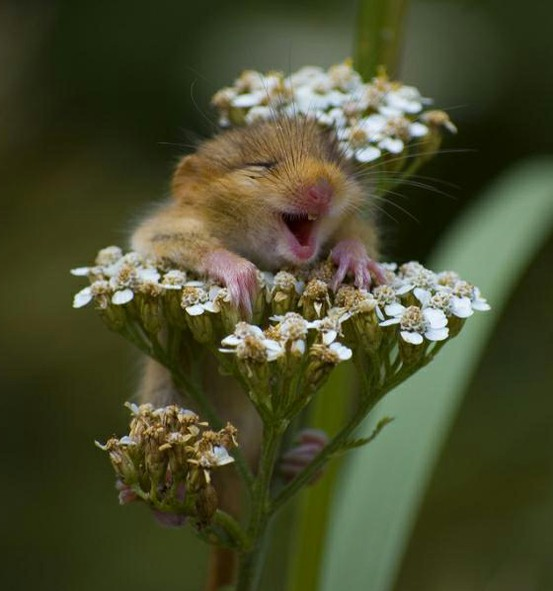 happy-mouse