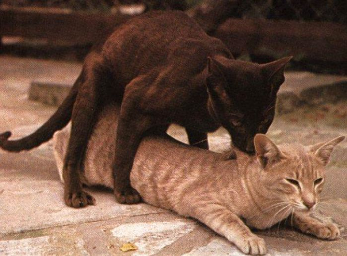 Male Cat And Female Dog Mating