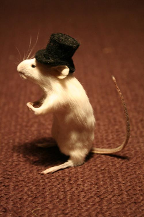 Mousetophat