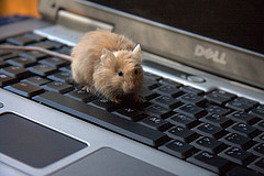 """I am Unshaved Mouse, and I approve this blog. All my readers should check it out!"""