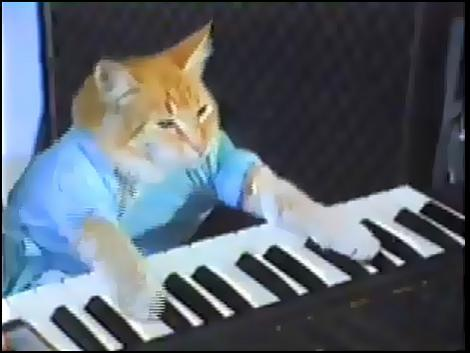 The keyboard cat in action.