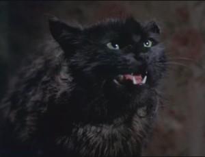 Psycho hobo cat