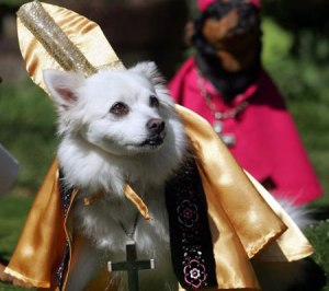 God, I hope the next Pope isn't a Rottweiler.