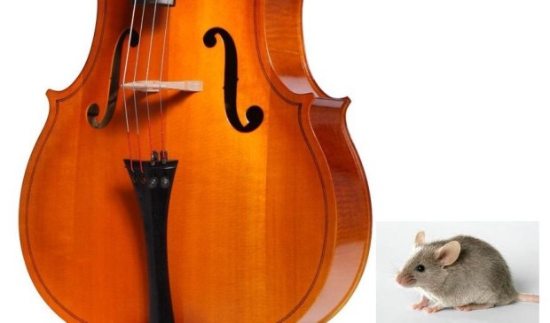 """""""See this Kuzco? This is the world's smallest violin playing just for you. Why does it seem so large? BECAUSE I'M A FUCKING MOUSE!"""""""