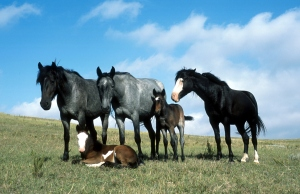 """These are called """"horses"""". Remember that, it's going to be important."""