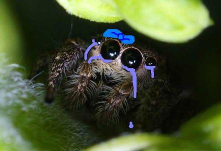 149734xcitefun-cute-spider-1